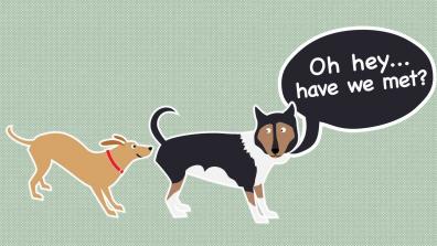 狗为什么互相嗅对方的屁股?